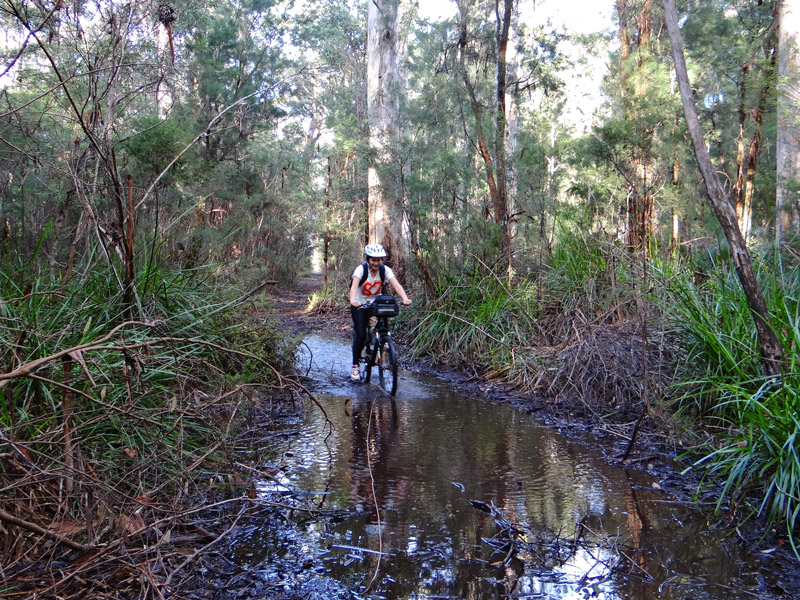 northcliffe riding trail