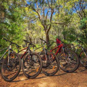 Row of mountain bikes