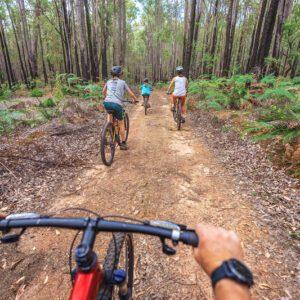 Munda Biddi Mountain Bike Explorers Dwellingup Adventures and Waypoints